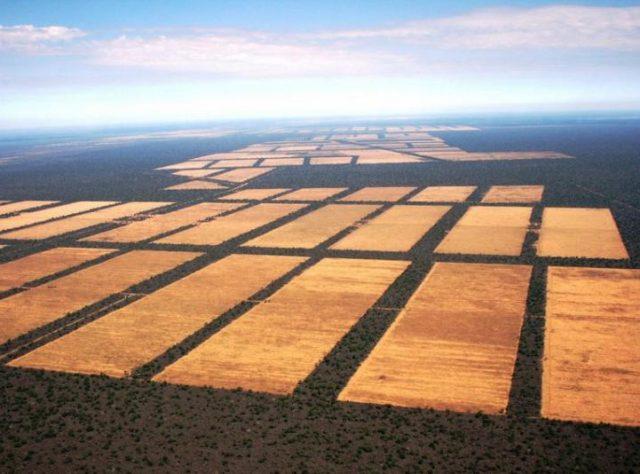 Non solo Amazzonia: GRAN CHACO